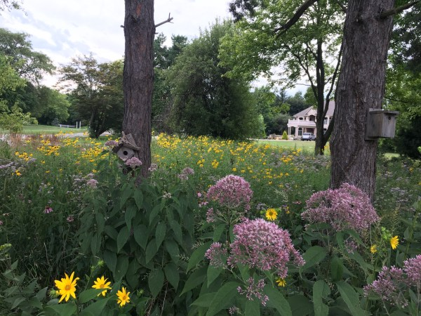 natural plants landscaping