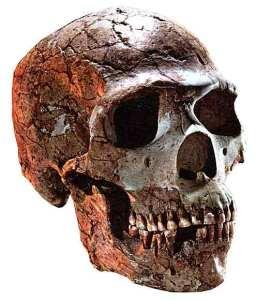 neanderthalskul