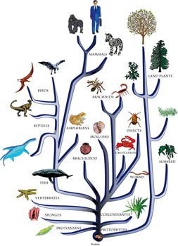 Creationist Evolutionary Tree Tree Pictures To Pin On