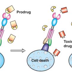diagram on enzyme [ 1726 x 1020 Pixel ]