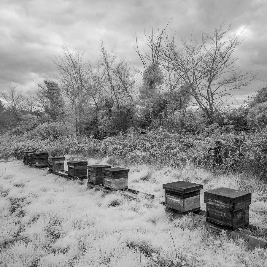 Black and white infrared landscape photo of beehives in a field in Norfolk