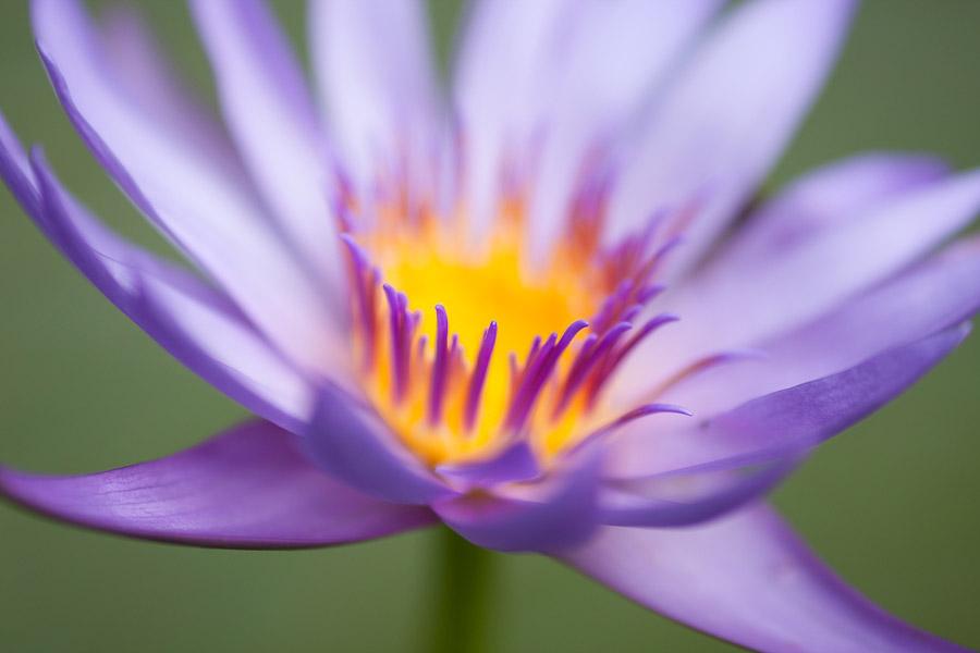 Close-up flower photo taken at f1.8 aperture
