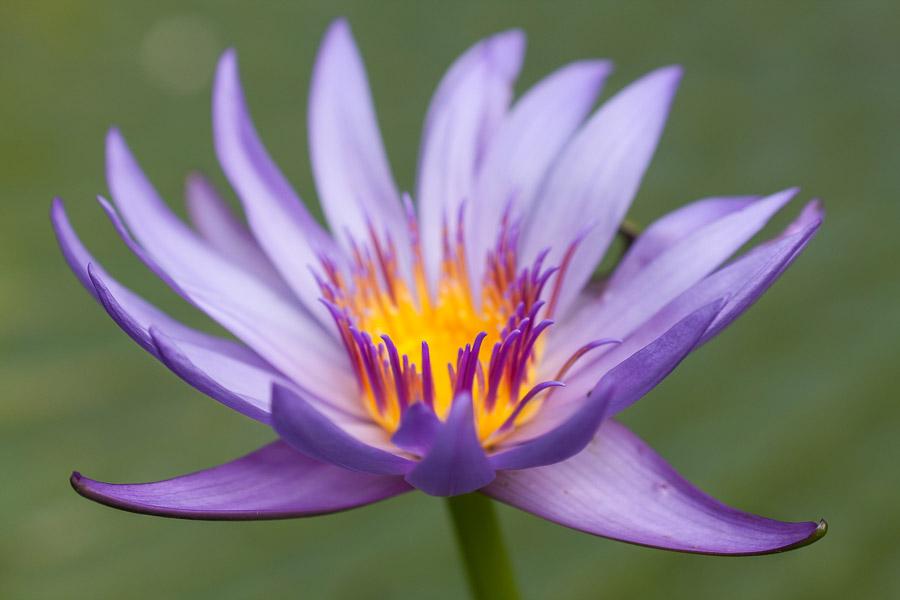 Close-up flower photo taken at f4 aperture