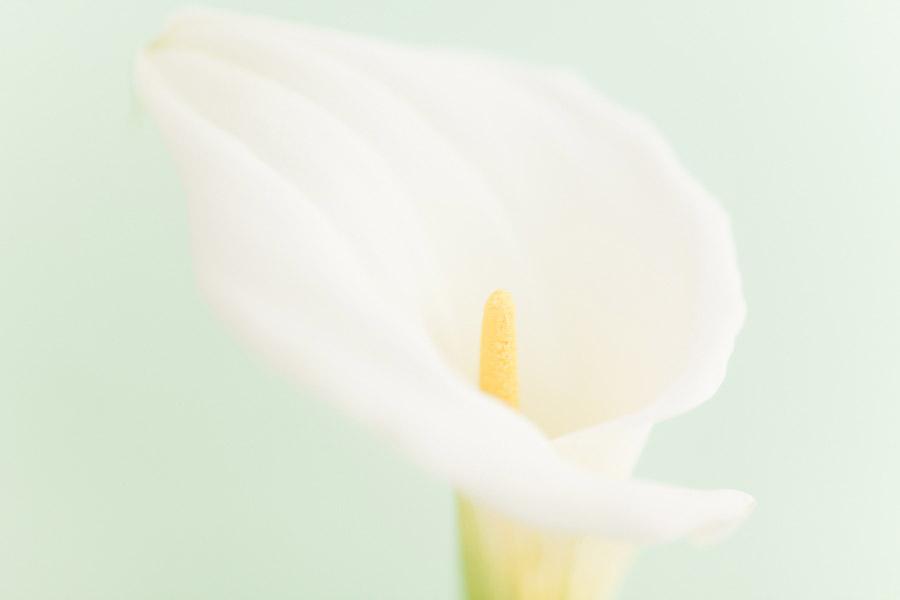 High key flower photo