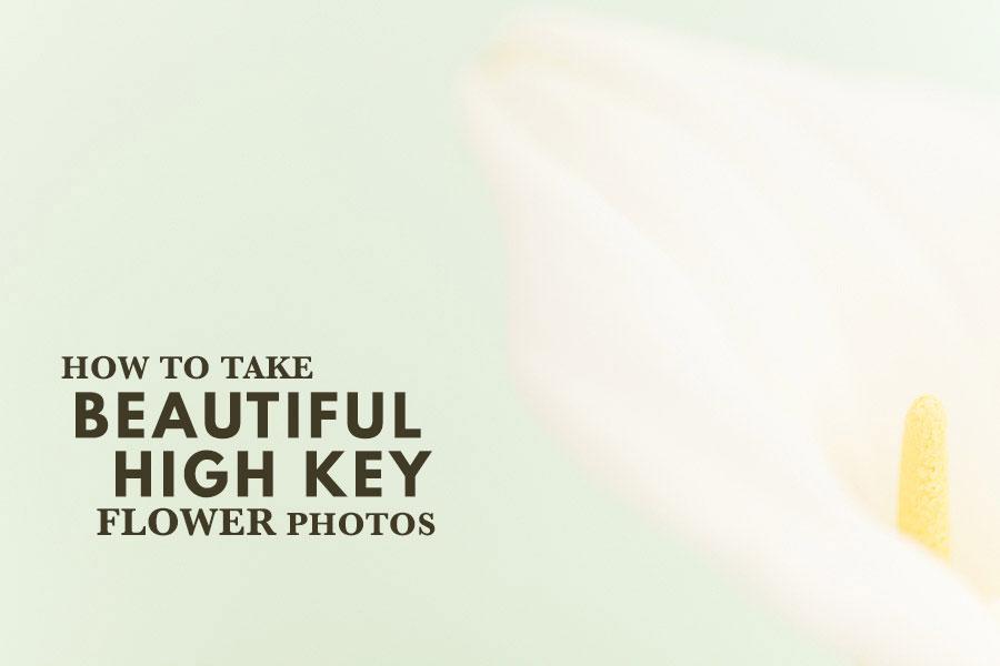 How To Take Beautiful High Key Flower Photos