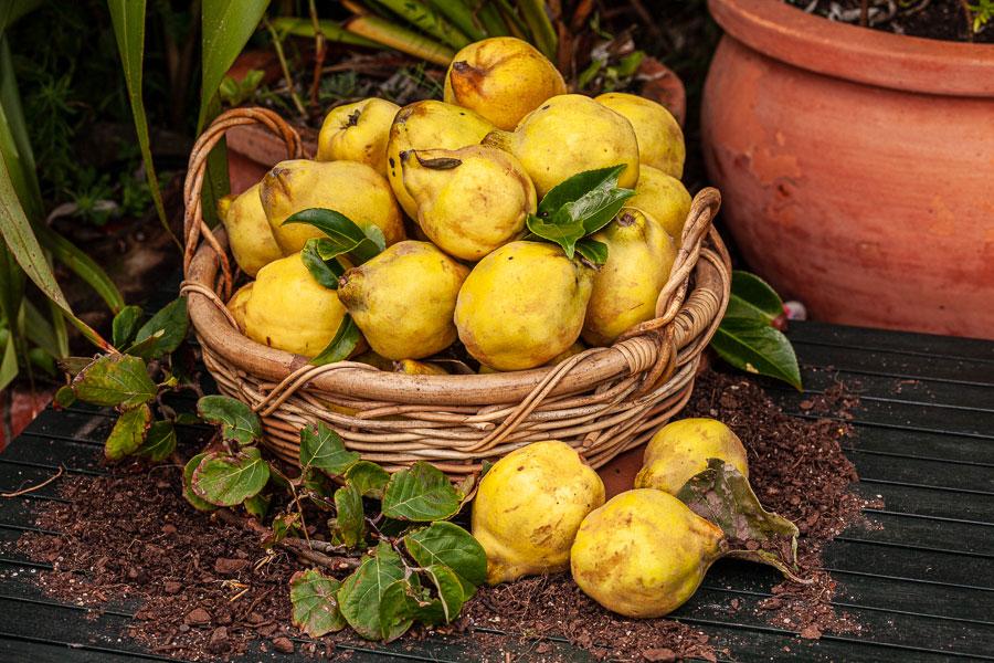 Interesting photo of lemons