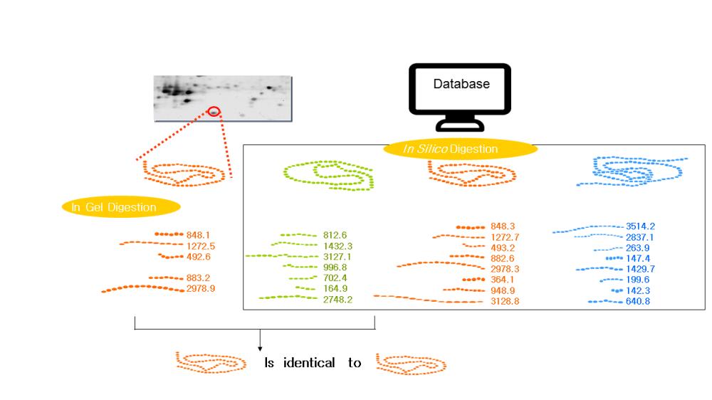 medium resolution of protein identification peptide mass fingerprinting