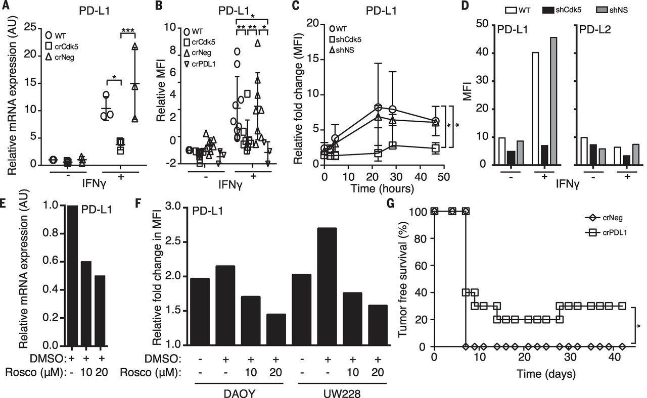 Cyclin in Tumor: Cdk5 Disruption Promotes Antitumor