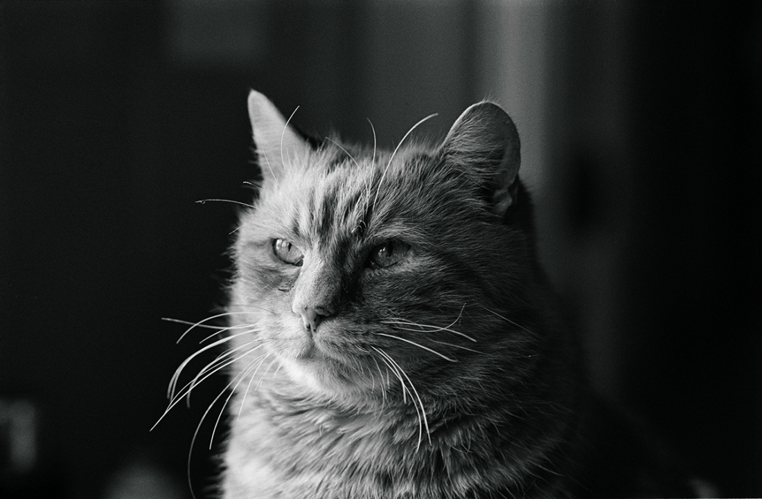 Jane Bowns Cats Charming black  white photographs of