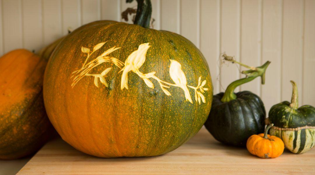 Halloween Pumpkin Carving by Courtney Cerruti  Creativebug