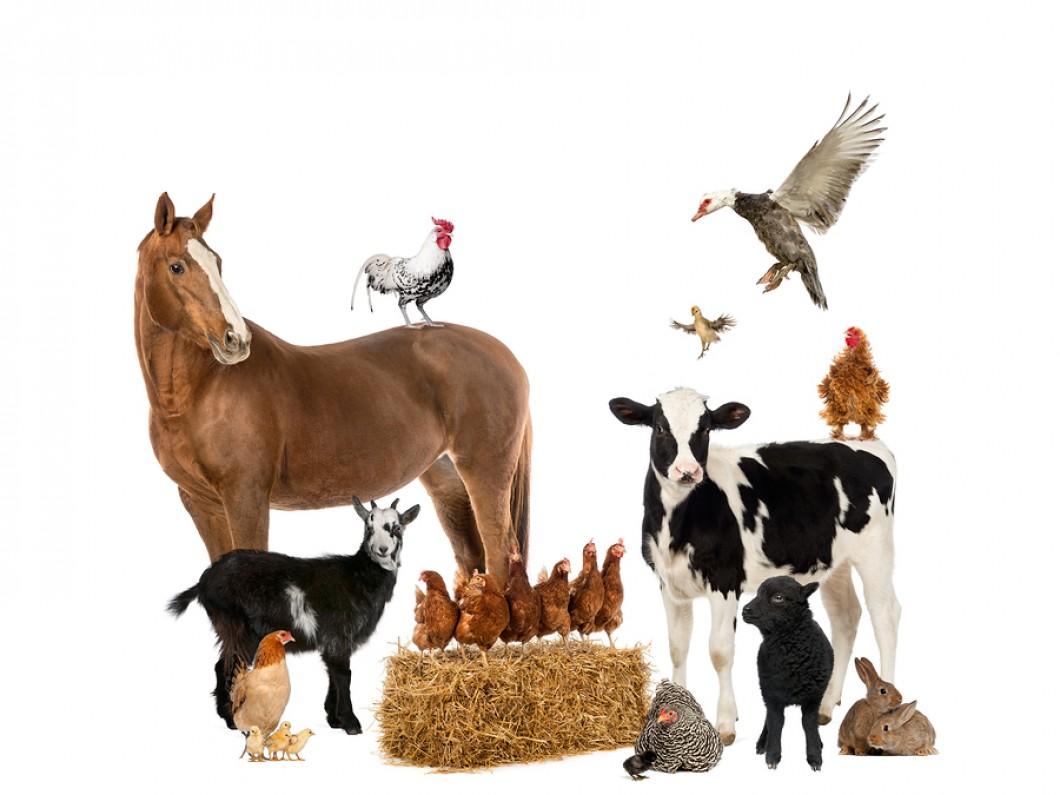 farm animals coloring poster creative