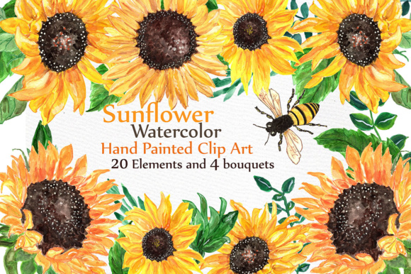 sunflower watercolor clip art graphic