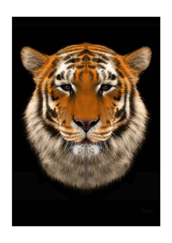 Tiger by Mik Strevens
