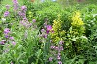 Flower Garden Photos - Creative Landscapes