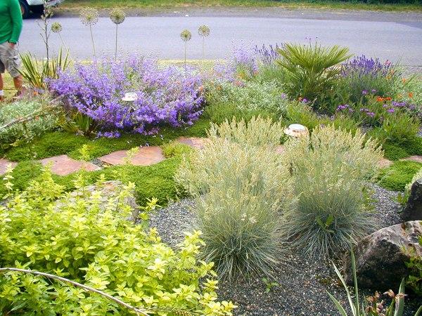 mediterranean gravel garden creative