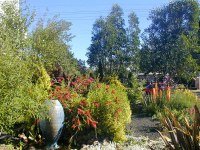 Mediterranean Rock Garden  Creative Landscapes, Inc.