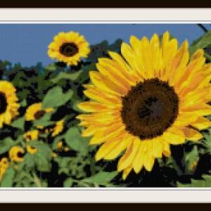 flower-cross-stitch-pattern-vsframed