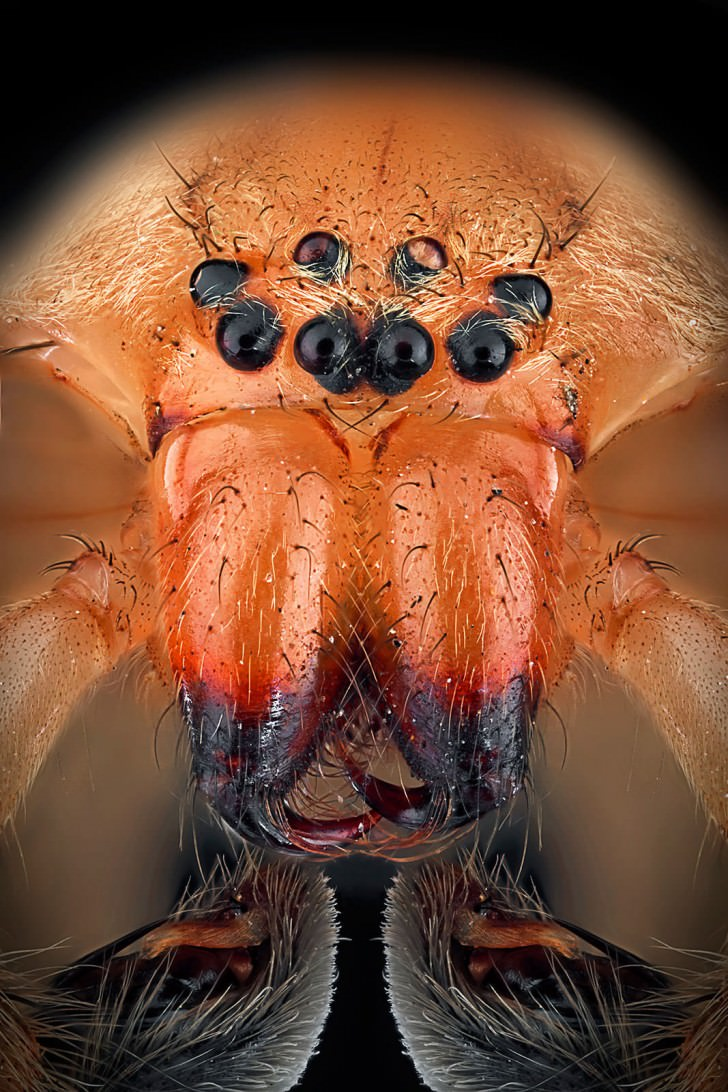 Macro Photography Portraits Of Insects By Paulo Lates