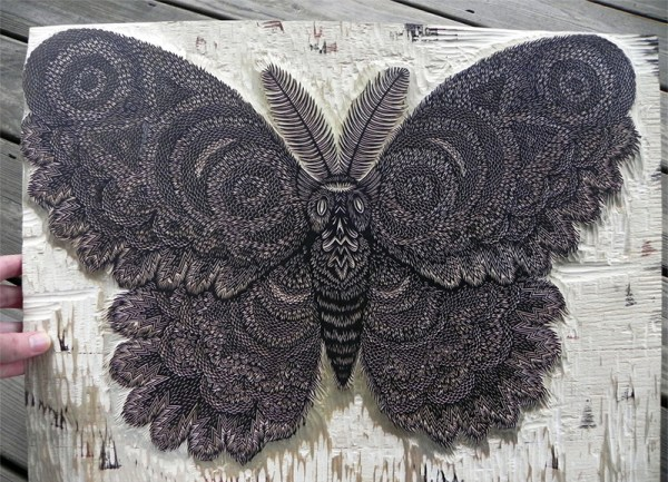 moth-2