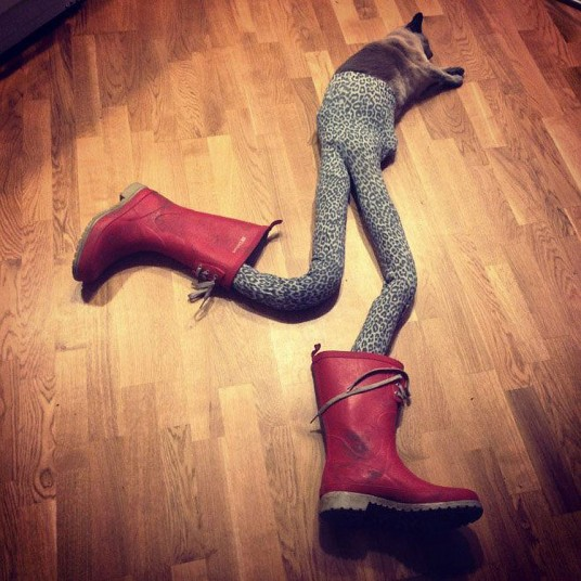 Cats_in_tights__2725493k