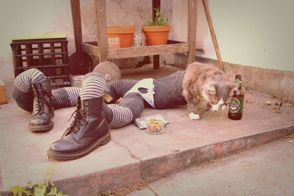 Cats_in_tights__2725494k
