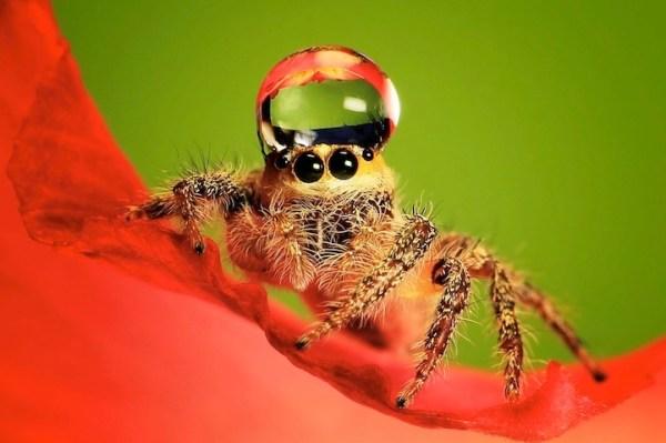 spiderswaterdrops01