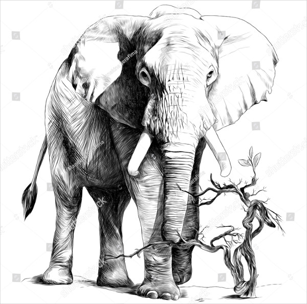 Elephant Drawings for Kid