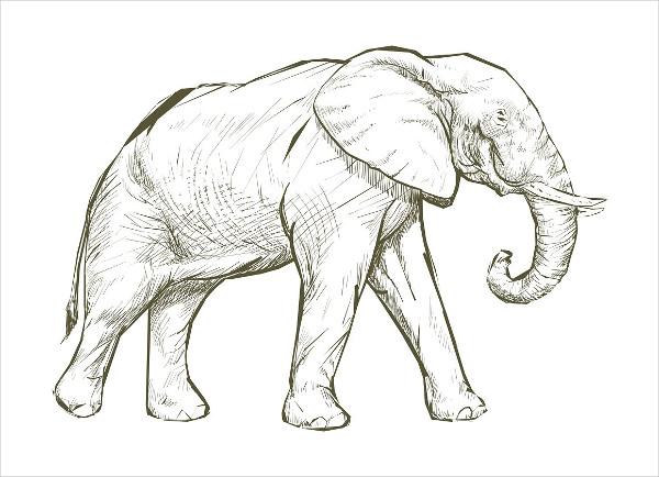Illustration Drawing of Elephants