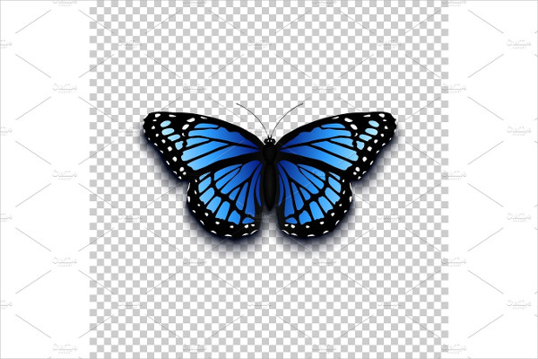 Realistic Butterfly Icon
