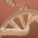 DNA Double Helix 3D model