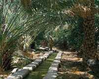 Oman Oasis Falaj