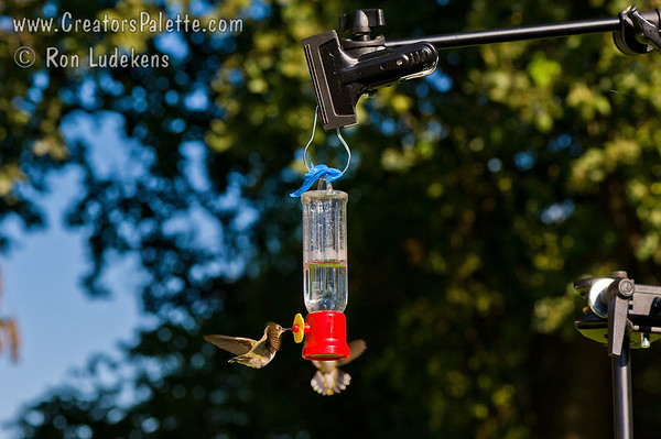 Lightstand Bird Feeder