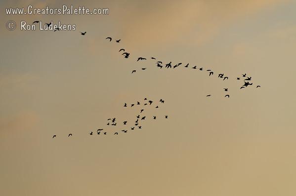 Seagulls Arriving
