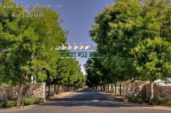Whitney Wild Oak Ranch