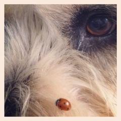 Patch & LadyBug