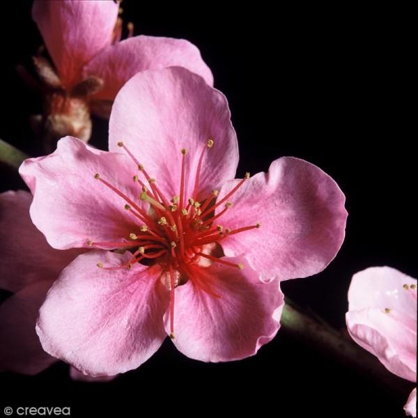 image 3d fleur fleur rose sur fond noir 30 x 30 cm
