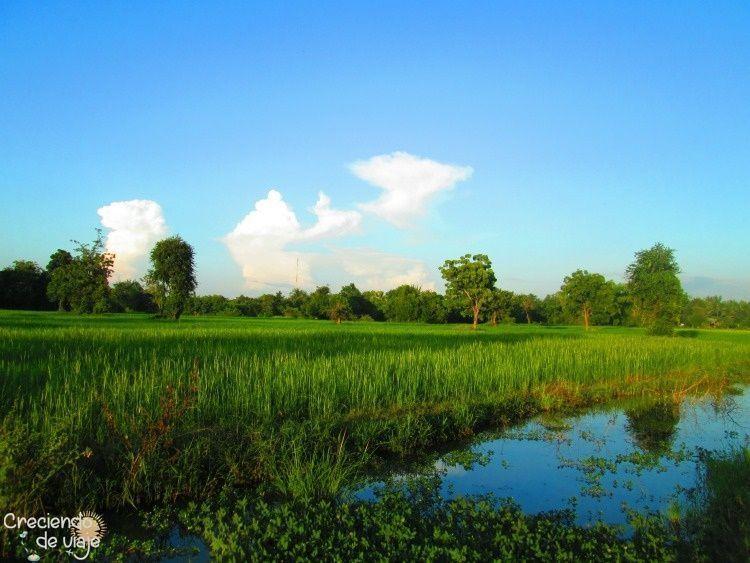 camboya campos de arroz en battambang