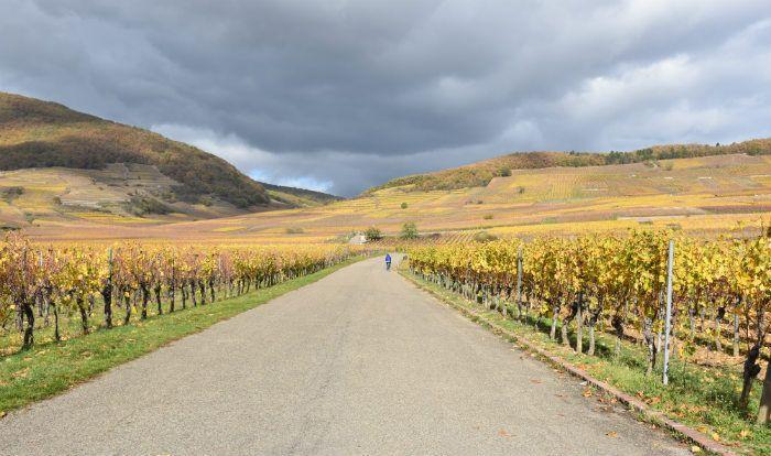 Alsacia - ruta de los vinos
