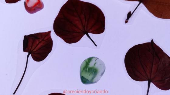 observacion hojas mesa luz1