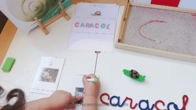Proyecto los caracoles creciendo y criando