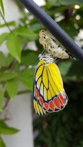 La mariposa representa que la vida es cambio. Unos ciclos se cierran para dar paso a lo nuevo