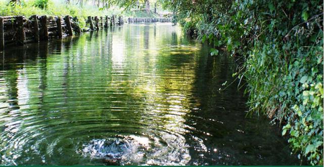 Dunas Regione fontanili e terre di bonifica