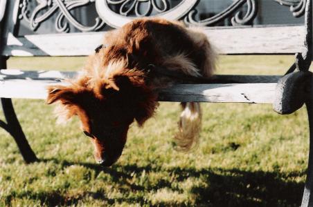 Amore per gli animali                                                                                                                      Puoi Fidarti Perché…: