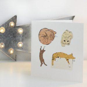 Colour Cat Greetings card