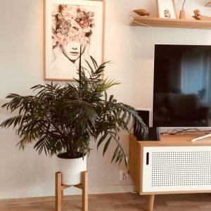 Mid-Century Plant Stand