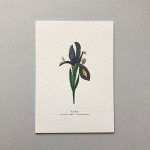 Iris A5 Print - CHMP012 A5 Iris 500x500