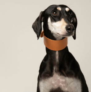ARTISAN LEATHER LINED SIGHTHOUND COLLAR NATURALE