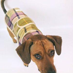 Jasper Dog Coat – Gargrave Lilac