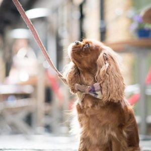Dog Bowtie – Gargrave Lilac