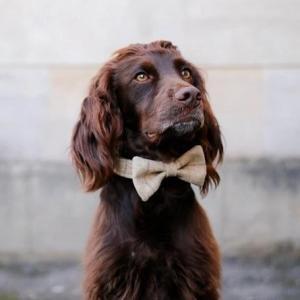 Dog Bowtie – Slate Oatmeal